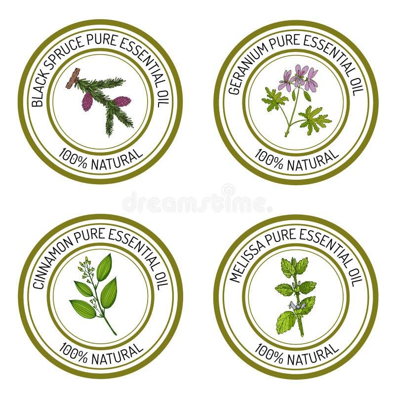Sistema de etiquetas del aceite esencial: picea negra, geranio, canela, m ilustración del vector