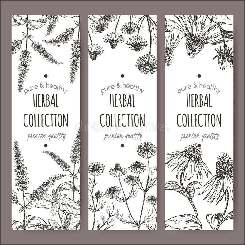 Sistema de 3 etiquetas del vector con la hierbabuena, la manzanilla y el echinacea ilustración del vector