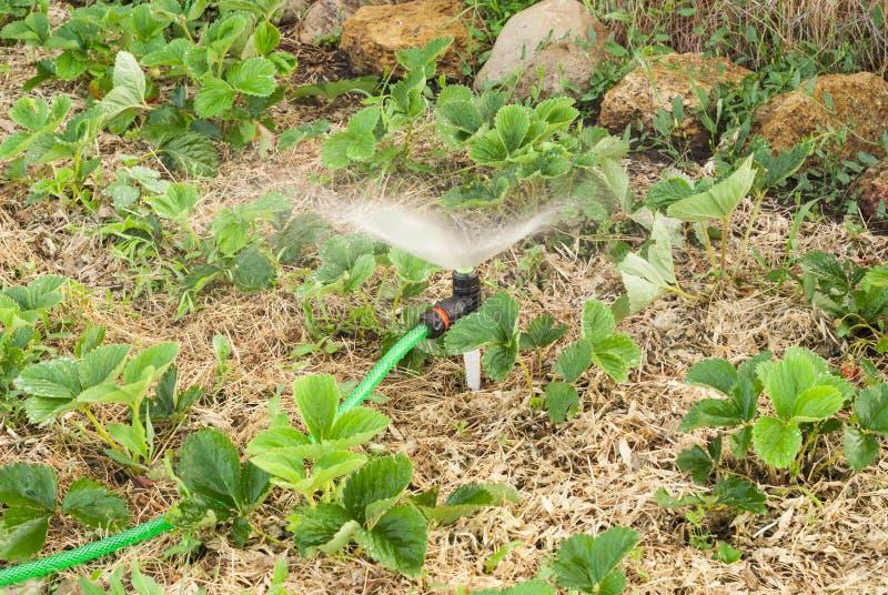 Sistema de extinção de incêndios para plantas molhando imagens de stock