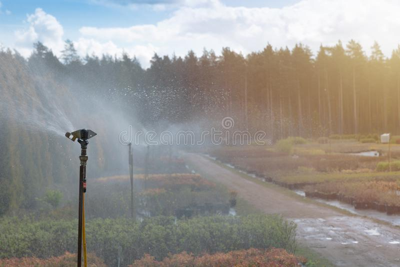 Sistema de sistema de extinção de incêndios da água que trabalha em uma plantação do berçário do jardim Sistema de irrigação da á fotografia de stock royalty free