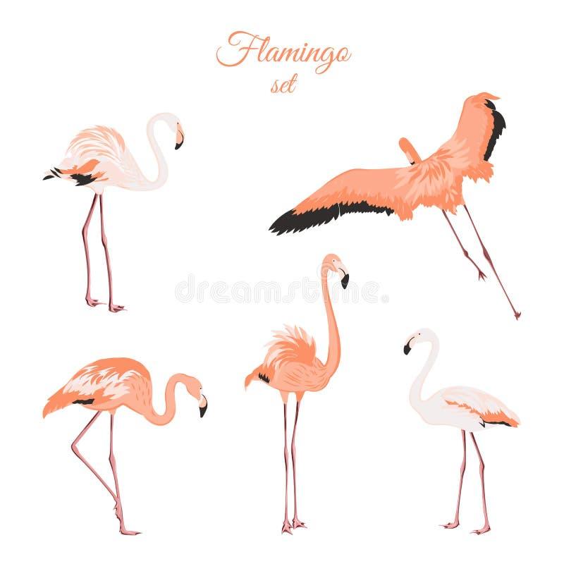 Sistema de flamencos rosados aislados en el fondo blanco ilustración del vector