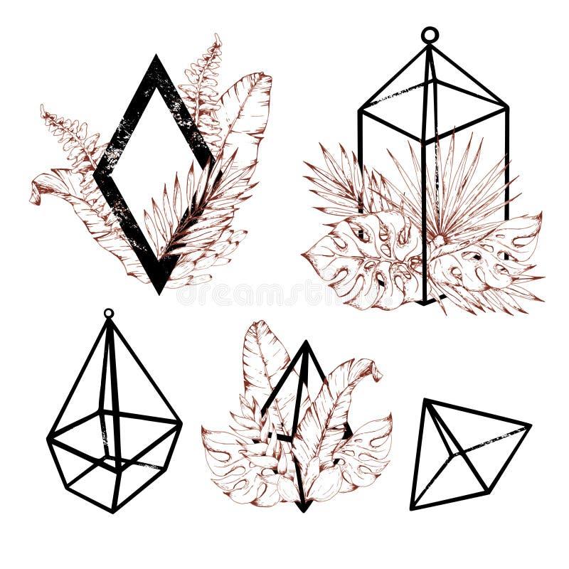 Sistema de florariums tropicales ilustración del vector