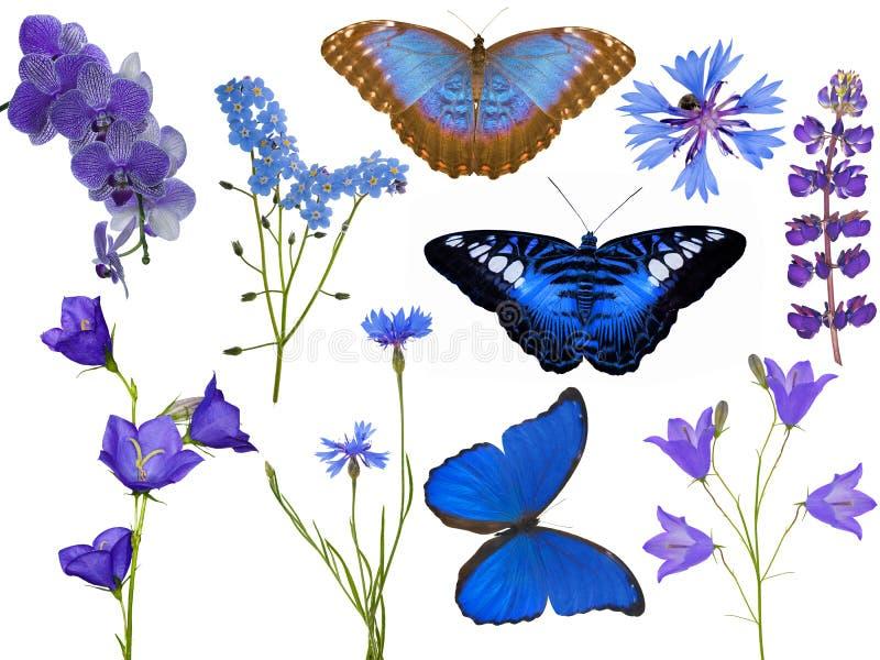 Sistema de flores azules y de mariposas aisladas en blanco fotografía de archivo libre de regalías