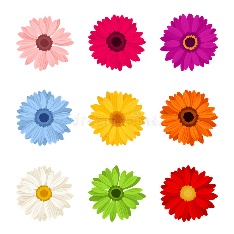 Sistema de flores coloridas del gerbera Ilustración del vector libre illustration