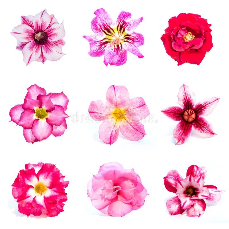 Sistema de flores de la azalea fotos de archivo