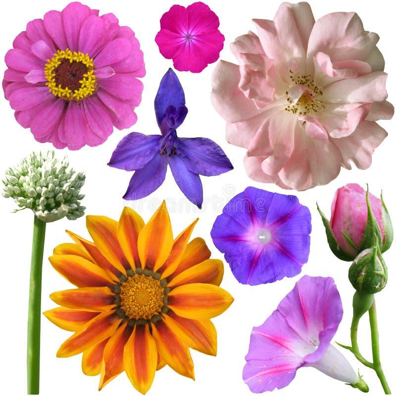 Download Sistema De Flores En Un Fondo Blanco Imagen de archivo - Imagen de pétalo, cuatro: 42429001