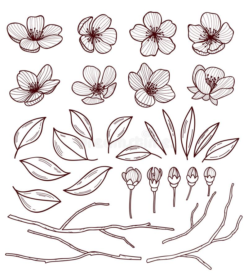 Sistema de flores hermosas del cerezo aisladas en fondo del wite Colección de flor dibujado mano de Sakura o de la manzana stock de ilustración