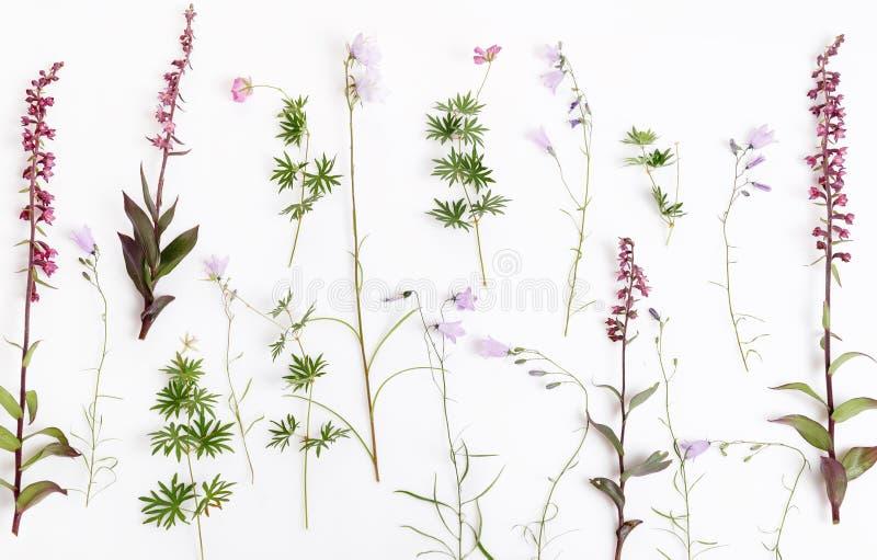 Sistema de flores salvajes hermosas de la orquídea, aislado en blanco fotos de archivo