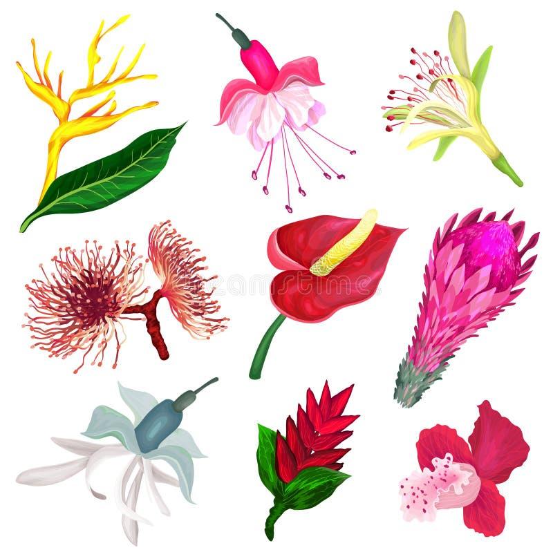 Sistema de flores tropicales en estilo realista stock de ilustración
