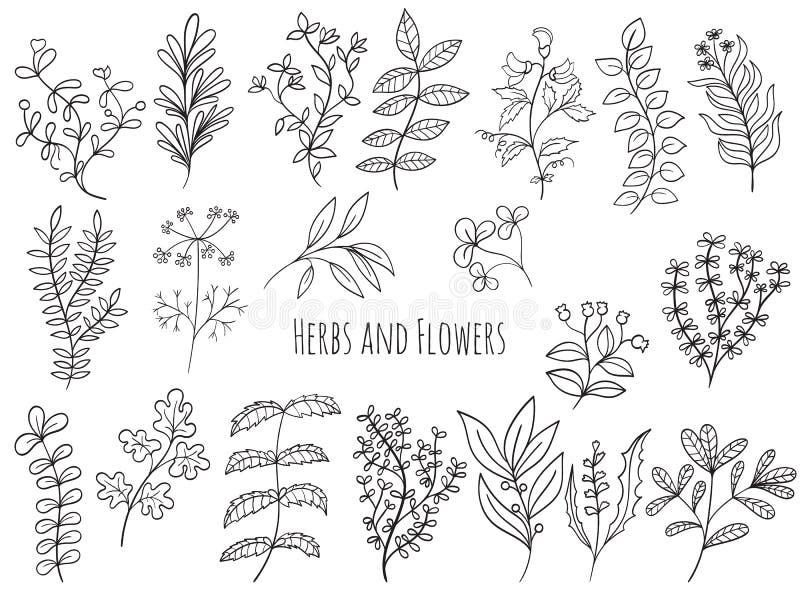 Sistema de flores y de hierbas ilustración del vector