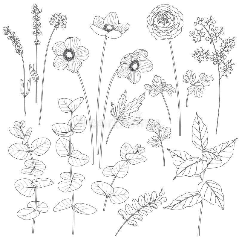 Sistema de flores y de hojas contorneadas ilustración del vector