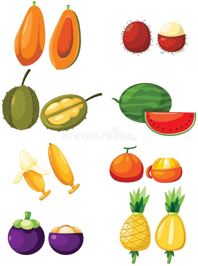 Sistema de frutas tropicales ilustración del vector