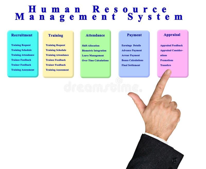 Sistema de gest?o dos recursos humanos ilustração do vetor