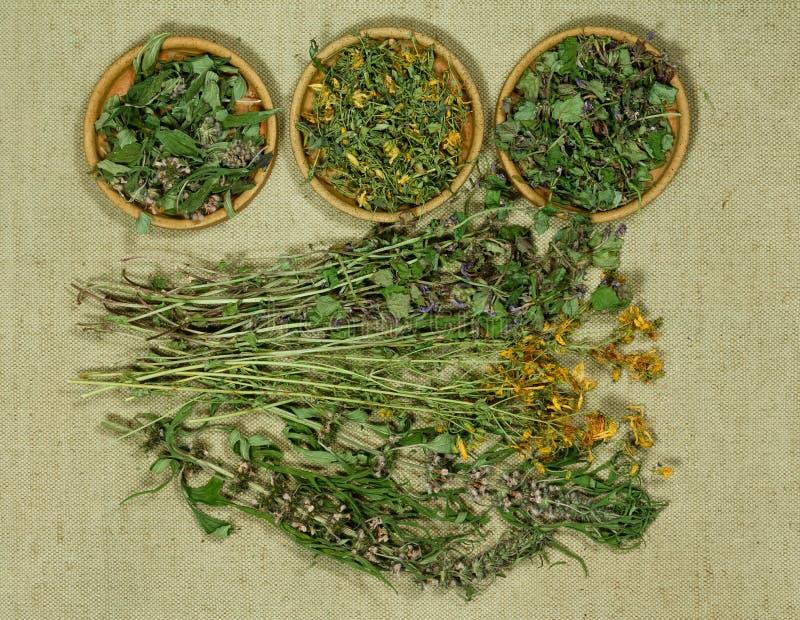 Sistema de hierbas curativas fotos de archivo