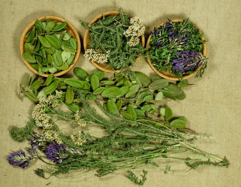 Sistema de hierbas curativas Seque las hierbas Medicina herbaria, m phytotherapy imagen de archivo libre de regalías