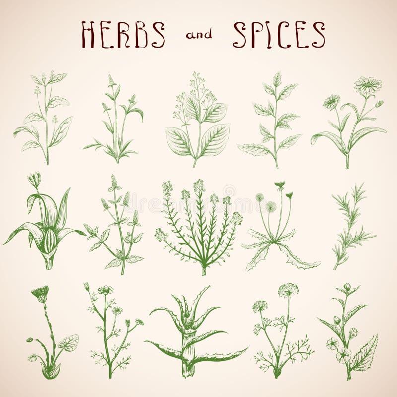 Sistema de hierbas y de especias libre illustration