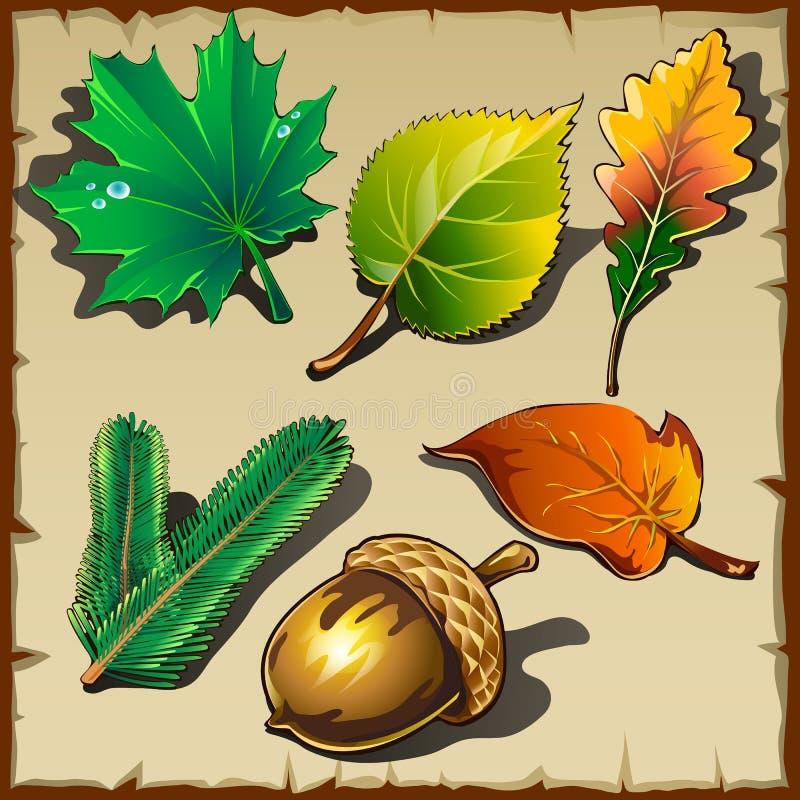 Sistema de hojas de diversos árboles, seis iconos stock de ilustración