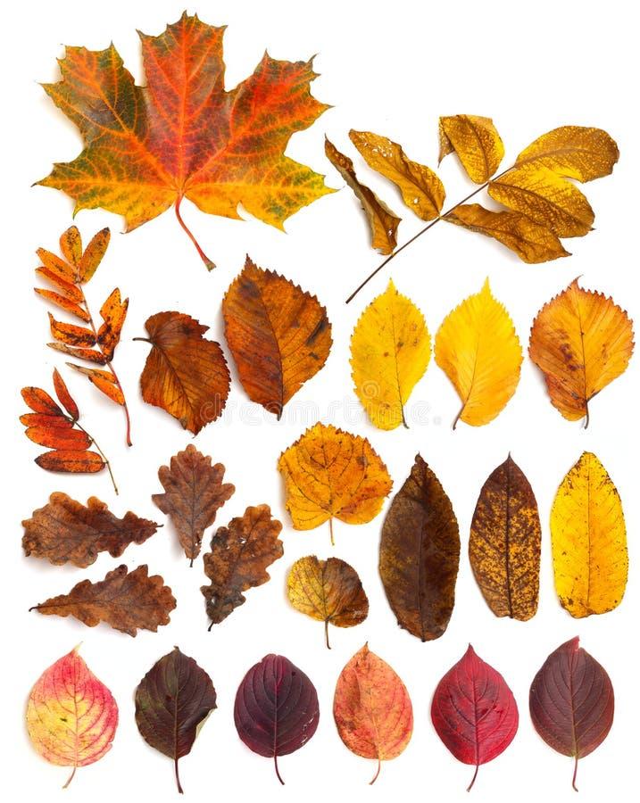 Sistema de hojas de otoño hermosas imagenes de archivo