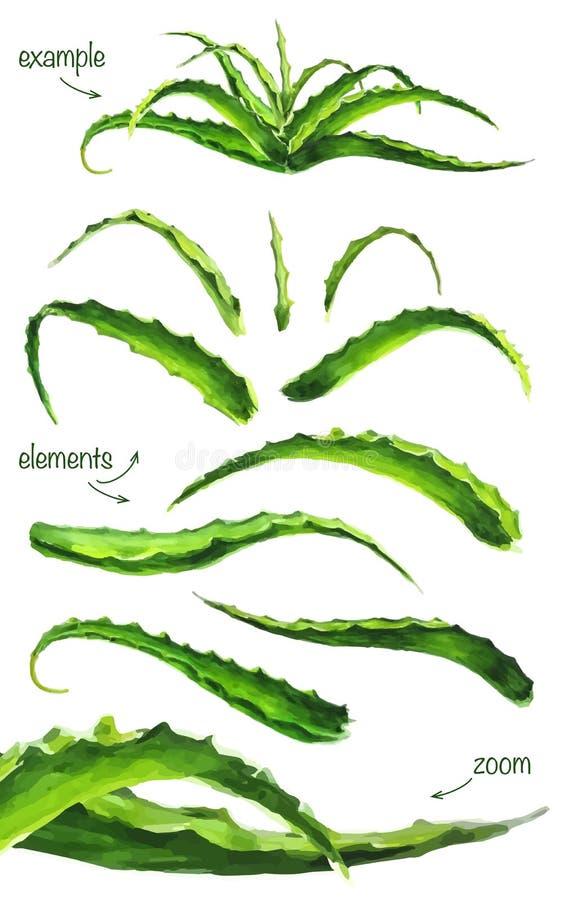 Sistema de hojas del áloe de la acuarela libre illustration