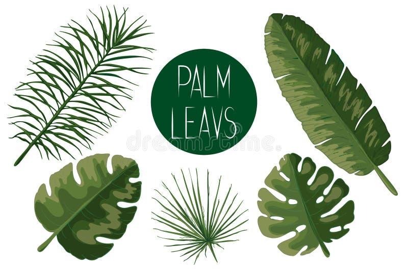 Sistema de hojas de palma verdes stock de ilustración
