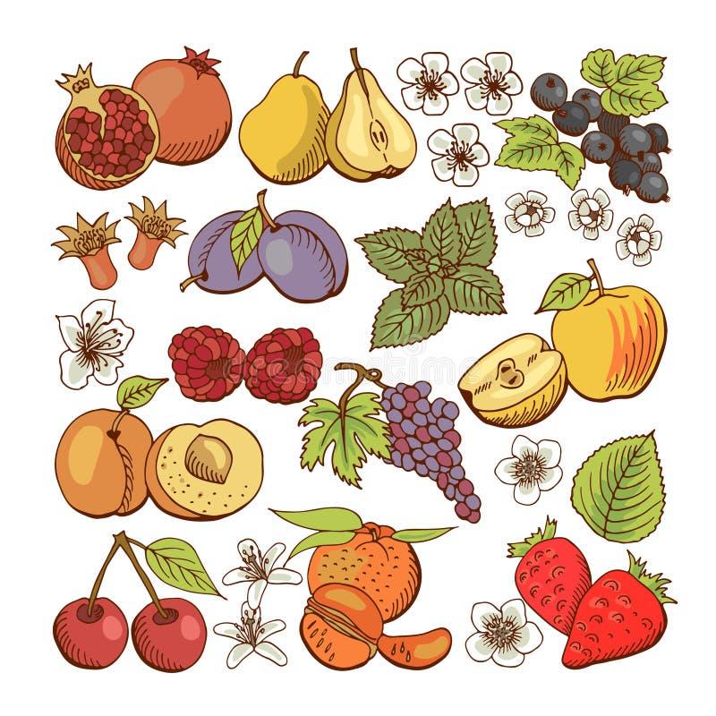 Sistema de iconos coloreados de la baya y de la fruta stock de ilustración