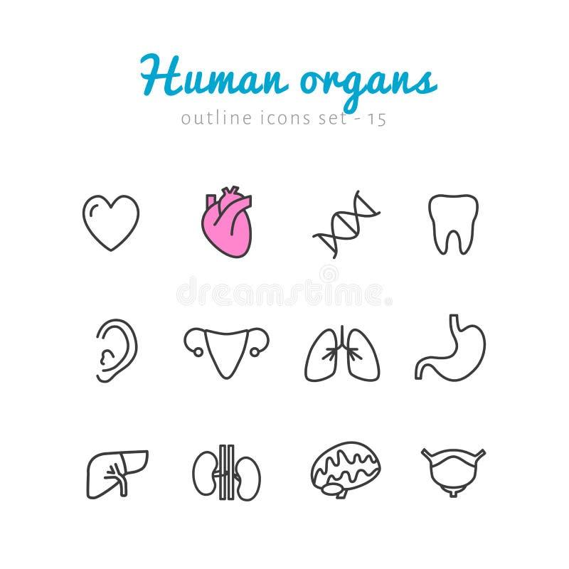 Sistema de iconos de los órganos humanos ilustración del vector