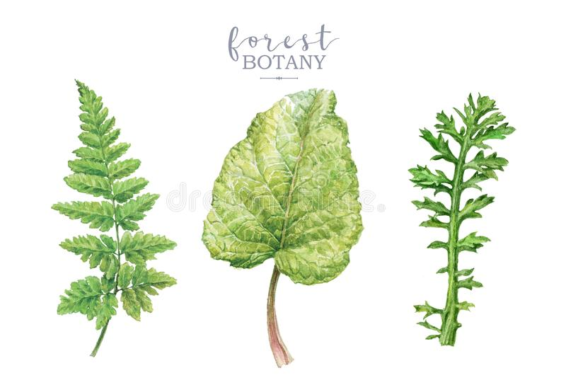 Sistema de imagen botancal de la acuarela con las plantas del bosque imagen de archivo libre de regalías