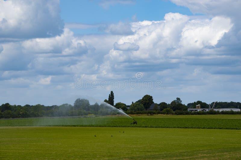 Sistema de irrigação do campo com os sistemas de extinção de incêndios da água que trabalham no campo de exploração agrícola fotografia de stock