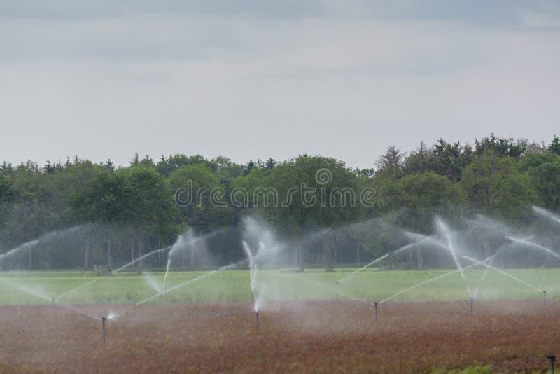 Sistema de irrigação do campo com os sistemas de extinção de incêndios no trabalho fotos de stock royalty free