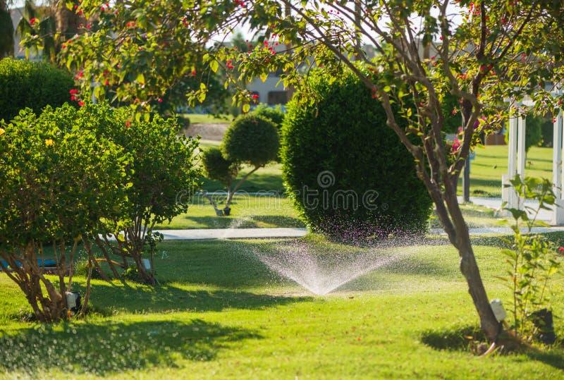 Sistema de irrigação no parque tropical imagens de stock