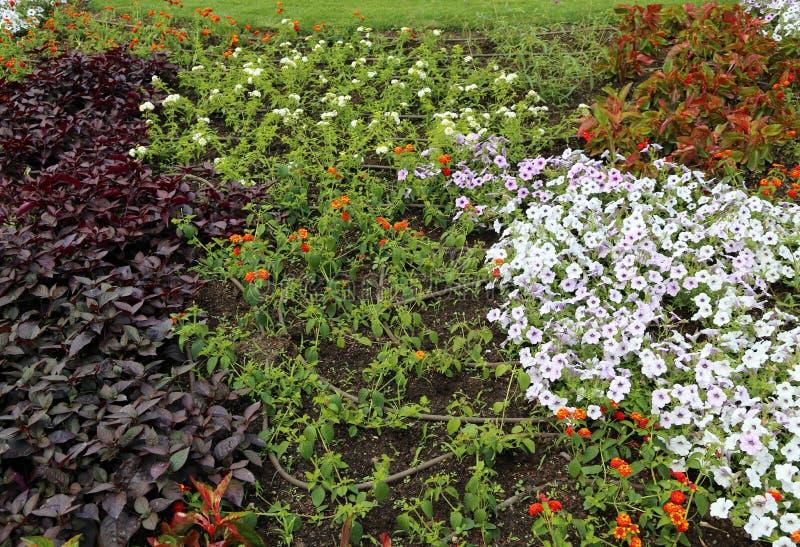 Sistema de irrigación automático para las flores coloridas en el flowerbe fotos de archivo libres de regalías