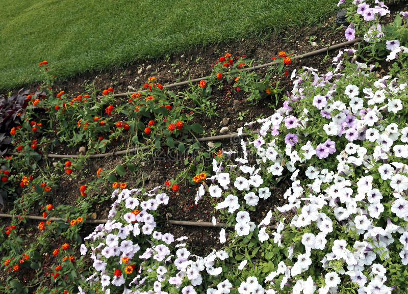 Sistema de irrigación automático para las flores coloridas en el flowerbe fotografía de archivo