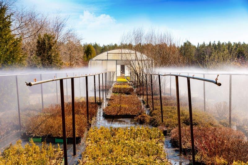 sistema de irrigación del agua que trabaja en cuarto de niños de la planta fotografía de archivo