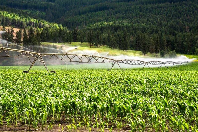 Sistema de irrigación del pivote que riega un campo de maíz en el Cluntryside de la Columbia Británica en Sunny Summer Day imágenes de archivo libres de regalías