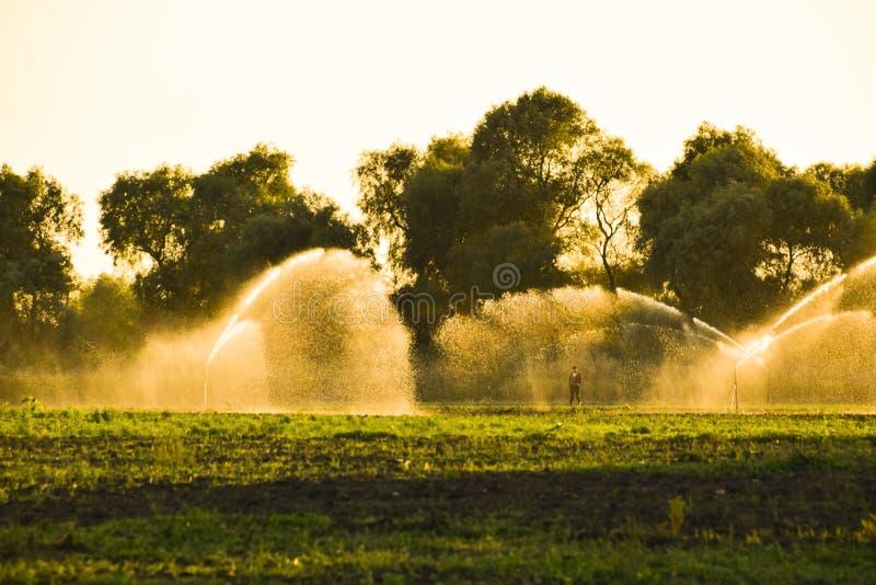 Sistema de irrigación en el campo de melones Riego de los campos Regadera imagen de archivo