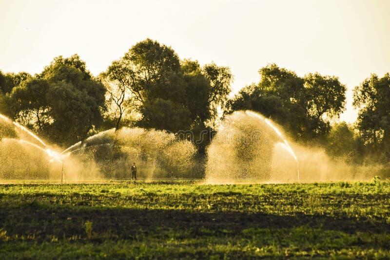 Sistema de irrigación en el campo de melones Riego de los campos Sprin fotos de archivo libres de regalías