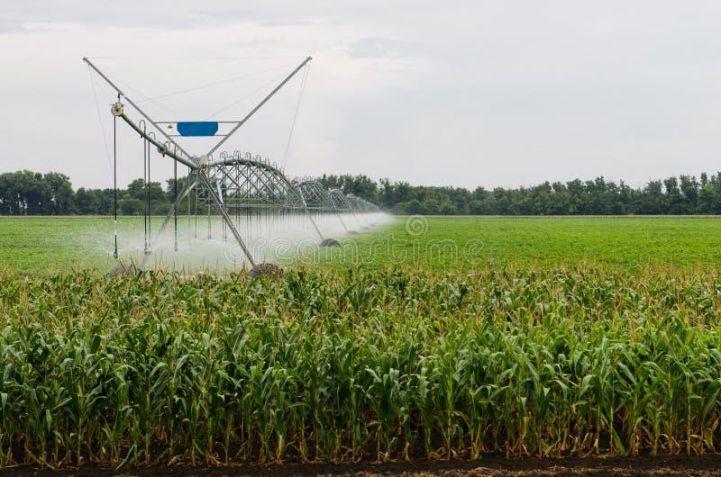 Sistema de irrigación lateral del movimiento en un campo de maíz fotografía de archivo