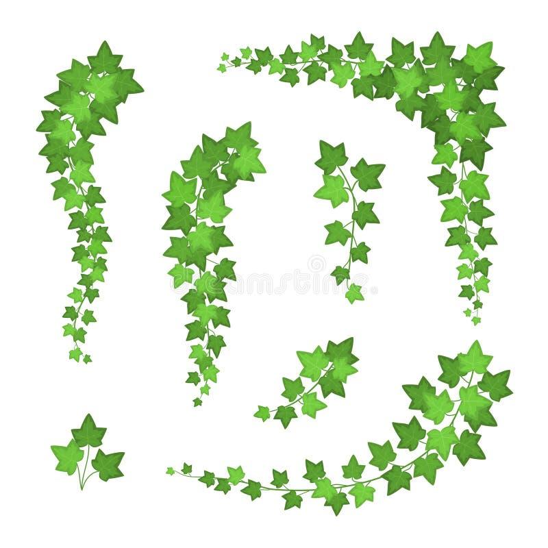Sistema de Ivy Green Leaves Different Types Vector stock de ilustración