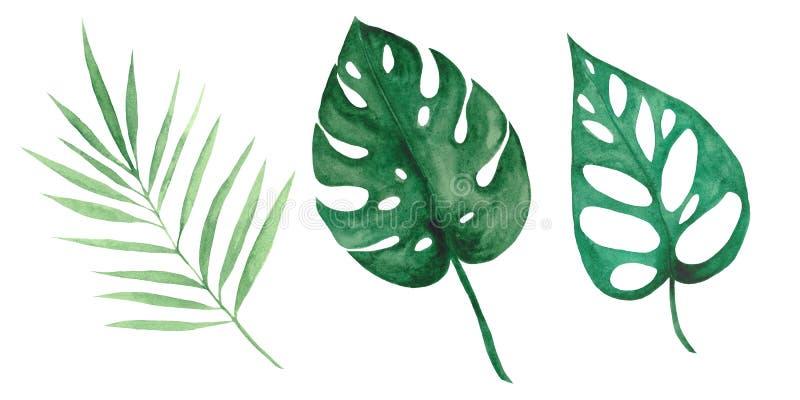 Sistema de la acuarela con las hojas y las flores tropicales libre illustration