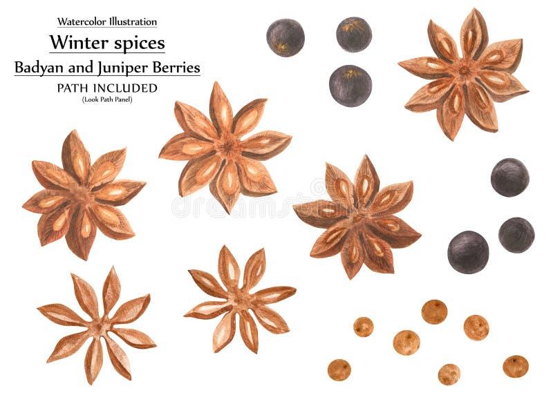 Sistema de la acuarela de las especias del invierno libre illustration