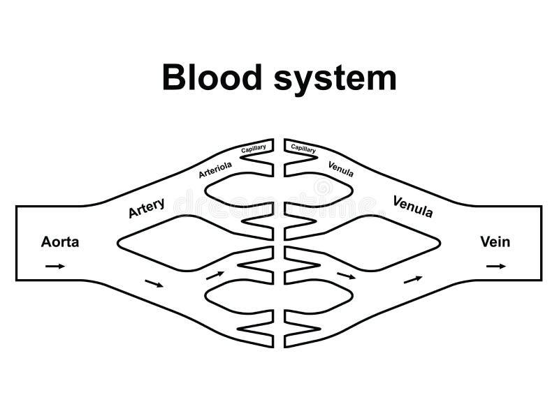 Sistema de la circulación de sangre ilustración del vector