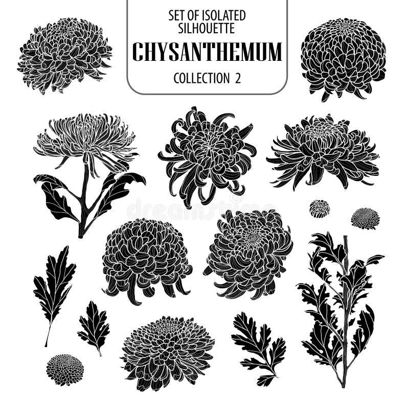 Sistema de la colección aislada 2 del crisantemo Estilo dibujado lindo del ejemplo de la flor a disposición Silueta en el fondo b stock de ilustración
