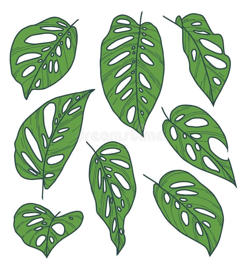 Sistema de la colección del vector de dibujos exóticos de la hoja de la planta de la máscara del mono de Monstera Adansonii libre illustration