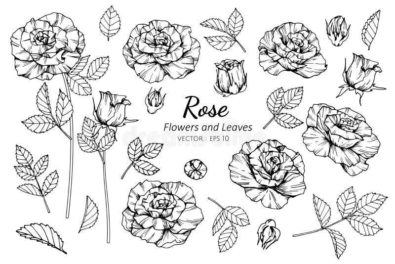 Sistema de la colección de flor color de rosa y de hojas que dibujan el ejemplo stock de ilustración