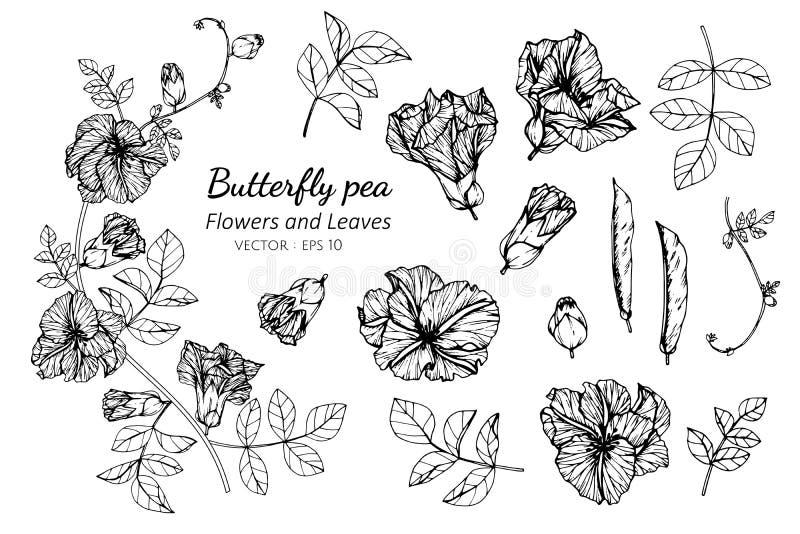 Sistema de la colección de flor y de hojas del guisante de mariposa que dibujan el ejemplo libre illustration