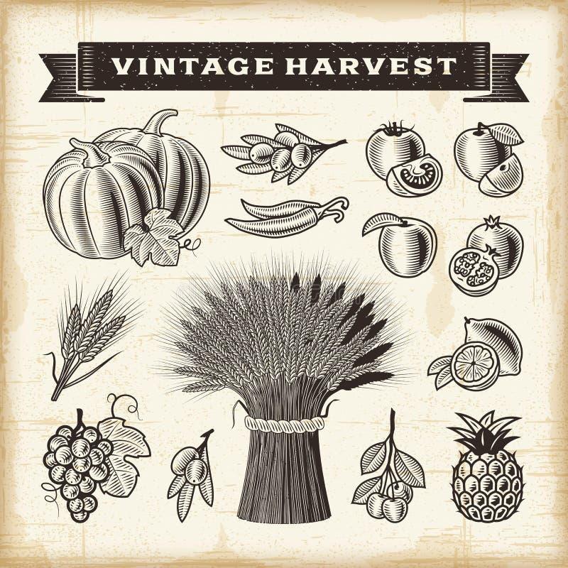 Sistema de la cosecha del vintage stock de ilustración