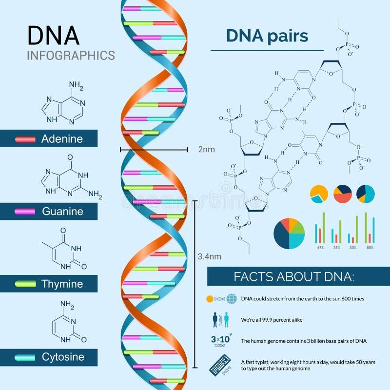Sistema de la DNA Infographics stock de ilustración
