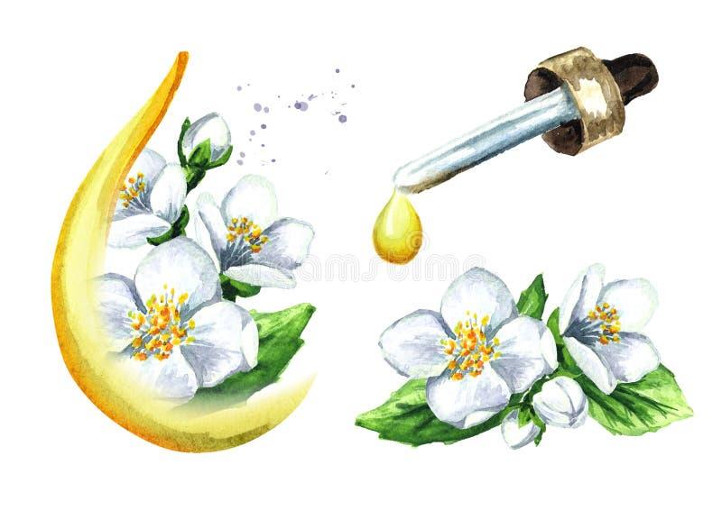Sistema de la flor blanca del jazmín y del aceite esencial, balneario y aromatherapy ejemplo dibujado mano de la acuarela, aislad ilustración del vector