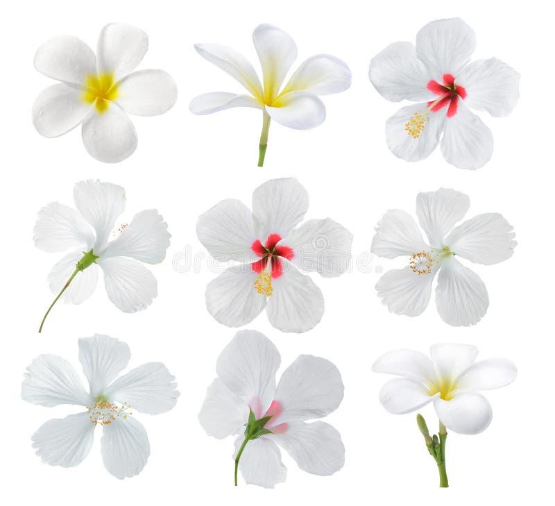 Sistema de la flor en el fondo blanco foto de archivo