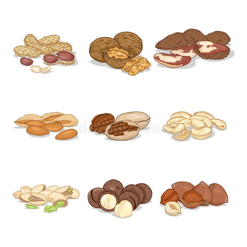 Sistema de la historieta del vector de nueces en pilas Colección sana del bocado stock de ilustración